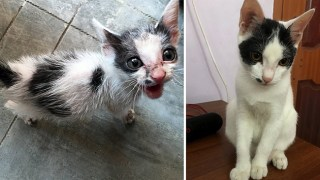 Rescuing a terrified abandoned kitten – The transformation will amaze you!