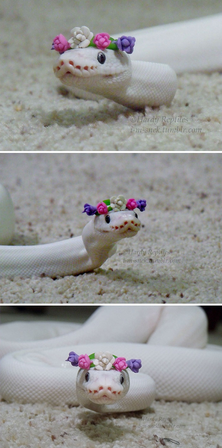 20 Adorable Snake Pics That Will Help You Conquer Your Fear