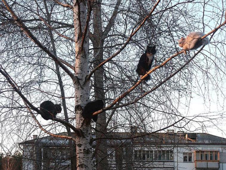 cats on tree