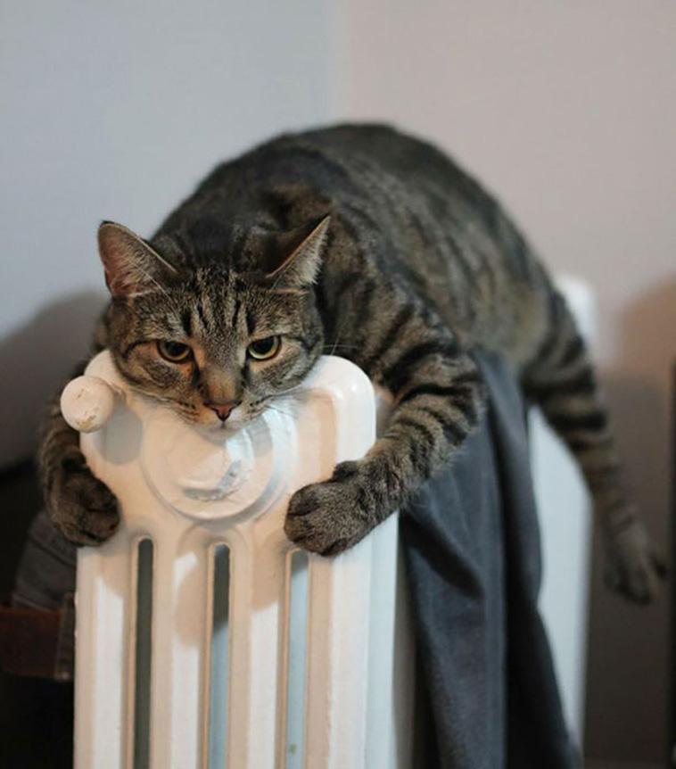 animals love warmth