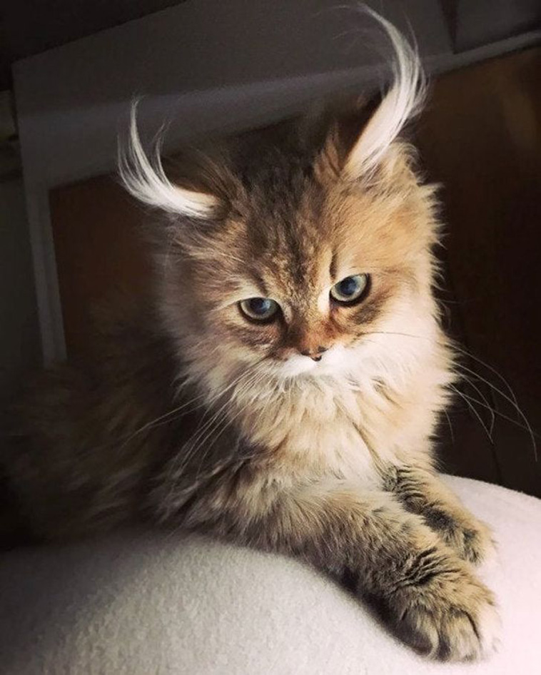 cats with unique marks