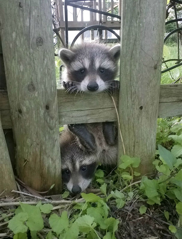 animals visiting people