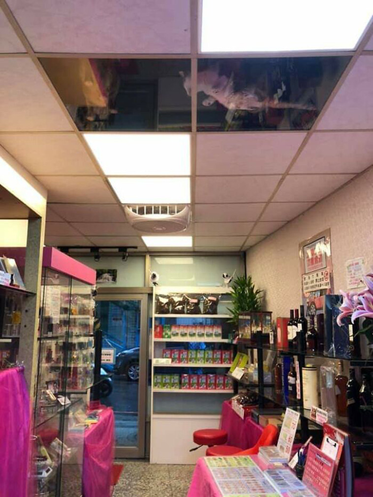 cats-watching-shop-owner-funny-2.jpg