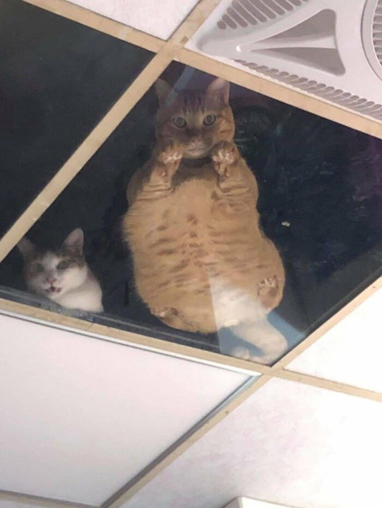 cats-watching-shop-owner-funny-3.jpg