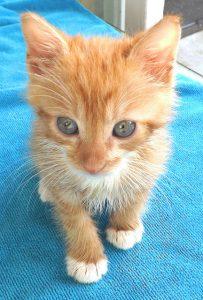 mindful-orange-kitten