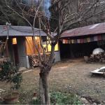 Forest Bathing Retreat Japan with The Mindful Tourist