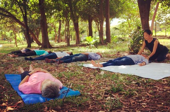 Experience forest bathing amidst lush trees