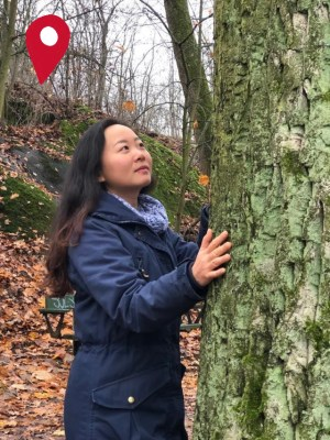 Forest Bathing Trips around the world with a woman touching a tree trunk