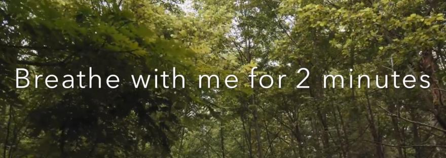 Increase energy with TMT Breath in a virtual forest walk
