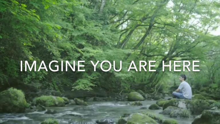 Forest Bathing in Japan with The Mindful Tourist