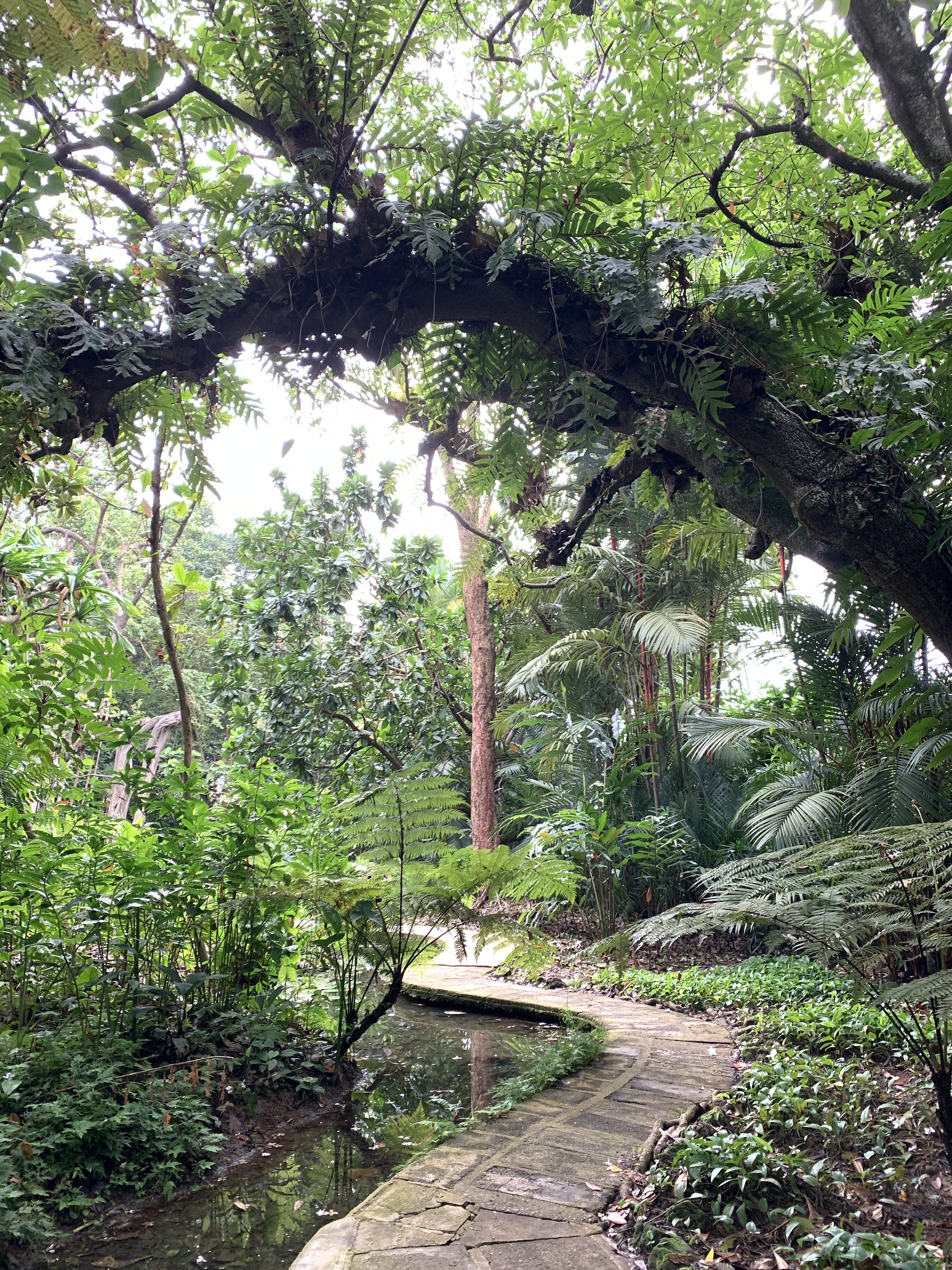 Forest Bathing Singapore