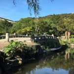 Maruyama Park Forest Bathing in Japan