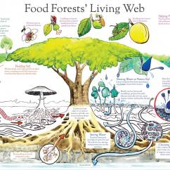Rainforest Food Chain Diagram For Kids 2007 Gsxr 750 Wiring Edible Agroforestry Designing Your Own Forest