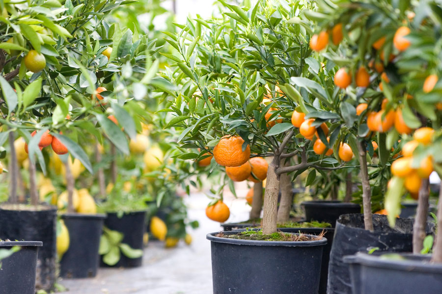 No Garden? Here Are 66 Things You Can Grow At Home In