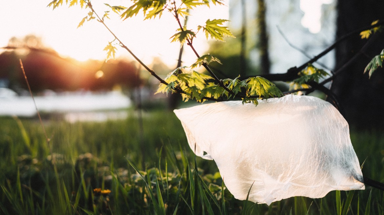Zero Plásticos na Natureza