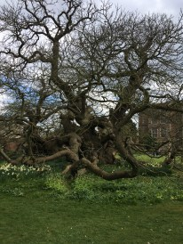 B Tree 2
