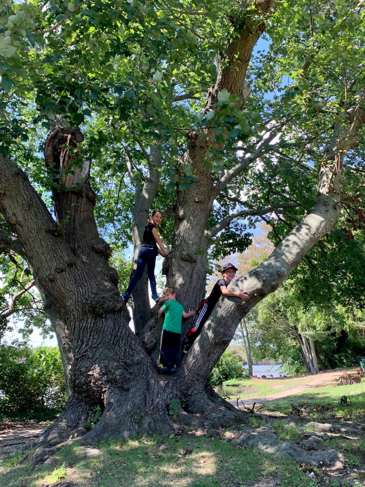 Family Hikes on Long Island - The Mint Chip Mama - Southards Pond Park
