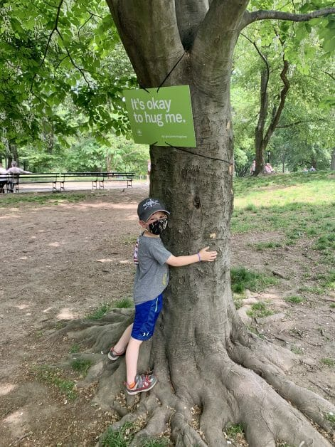 A little boy hugging a tree in Central Park