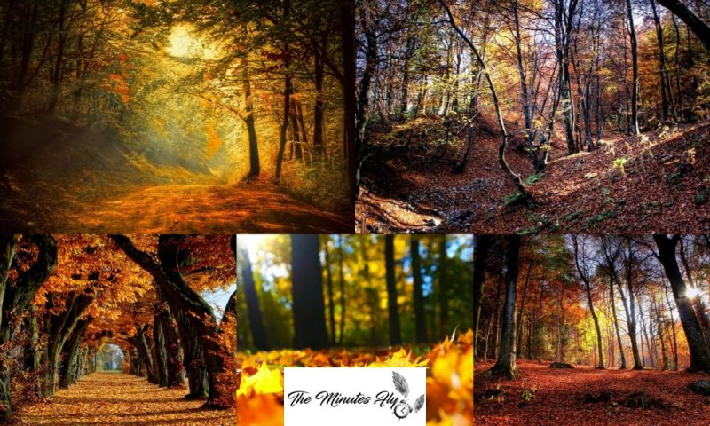 magie d'autunno una stagione d'amare - travel - the minutes fly