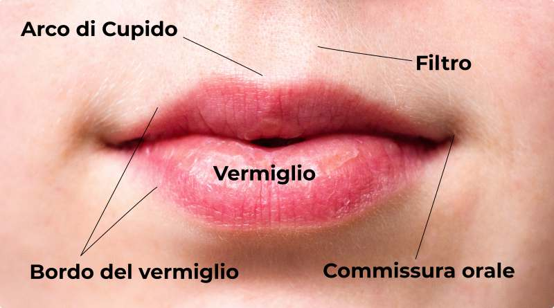 labbra-anatomia-dott-letizia-foglieni-the-minutes fly
