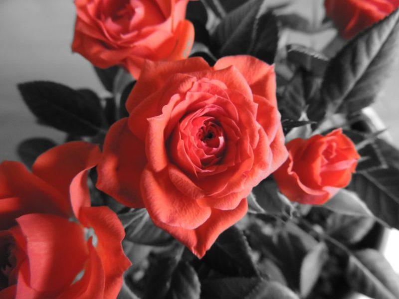 febbraio è tanto amore - evento - the minutes fly - web magazine - rose rosse