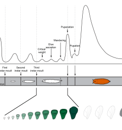 pulses of the developmental hormone ecdysone induce the moults between larval stages and metamorphosis the timing of these pulses depends on environmental  [ 2861 x 1922 Pixel ]