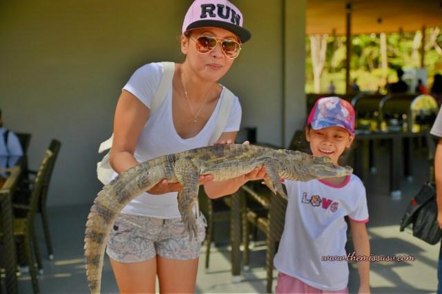 Cebu Safari and Adventure Park - Baby Crocodile
