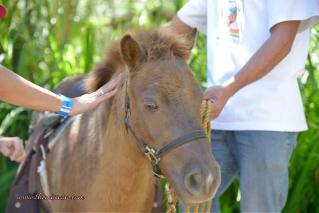 Cebu Safari and Adventure Park - Little Pony