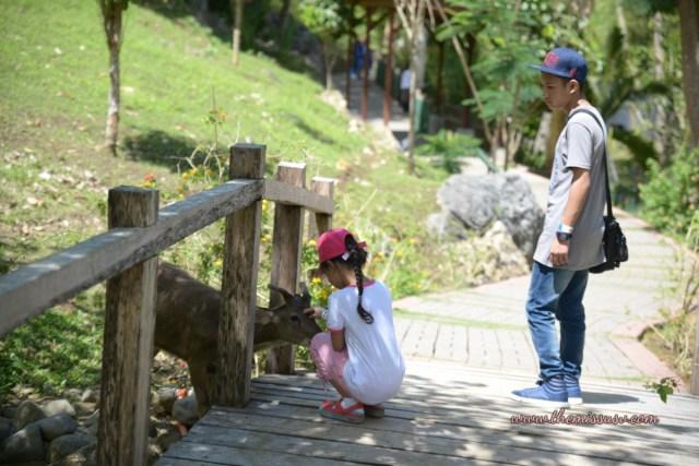 Cebu Safari and Adventure Park - The Deer Likes Her!
