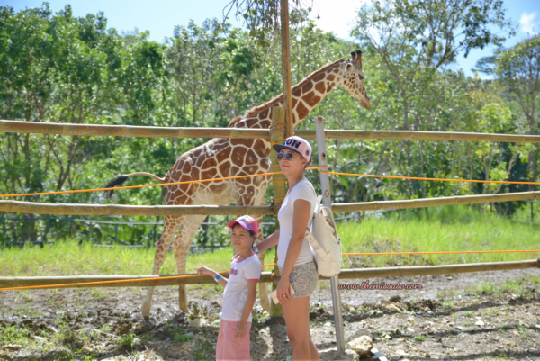 Cebu Safari - What to do in Cebu