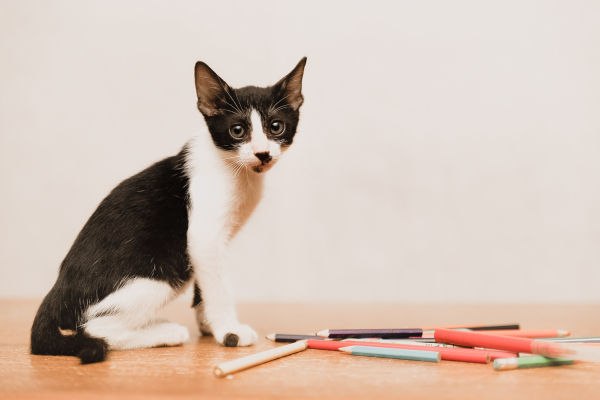 Tips for new cat owners - What to prepare before you adopt a cat
