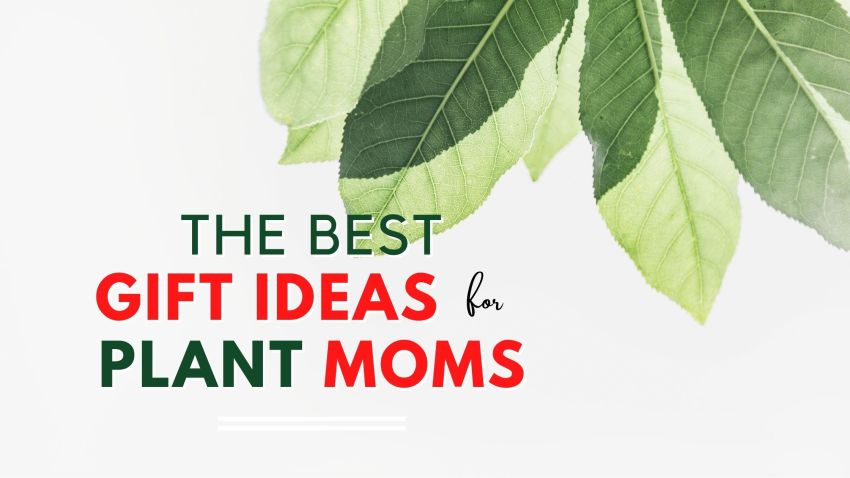 The Best Gift Ideas for Plant moms