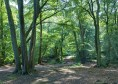Epping_Forest_Centenary_Walk_2_-_Sept_2008