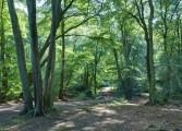 Epping_Forest_Centenary_Walk_2_-_Sept_2008