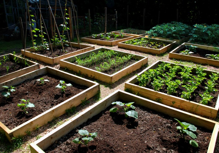 Raised Gardens For Producing Vegetables