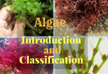 What is Algae ? What are the types of Algae ? How do we classify algae ?