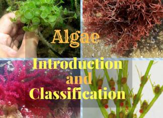 What is Algae ? What are the types of Algae ? How do we classify algae ?