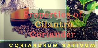 What are the Properties of Cilantro, Coriander or Coriandrum sativum ?