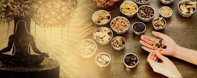 Why do Hindus Worship the Tulsi Plant (Basil or Ocimum