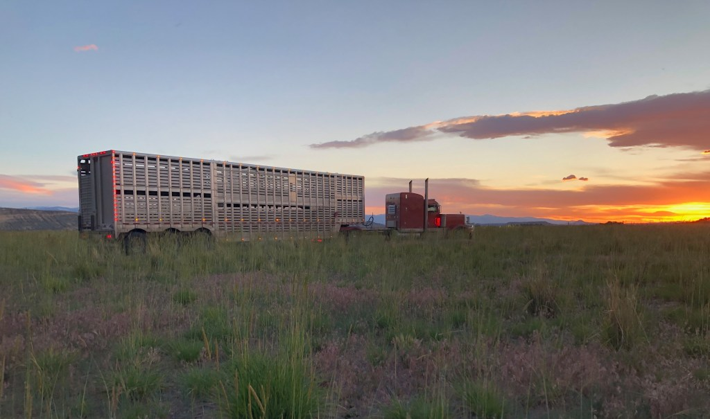 The semi-truck hauling the Eastern Shoshone Tribe's new buffalo arrived just before sunset