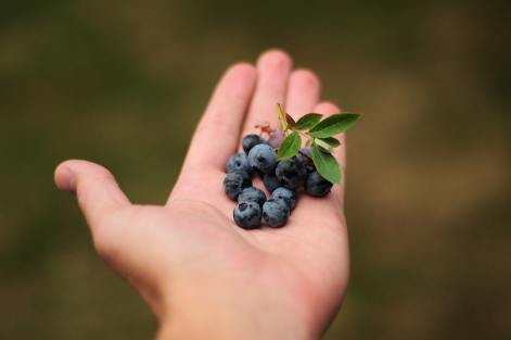 agriculture-berries-berry-302577