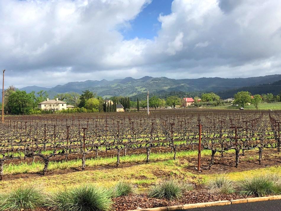 vineyards-lr 2.jpg