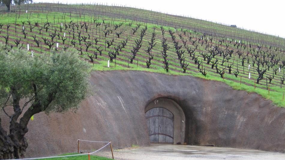 Bella-Winery.jpg