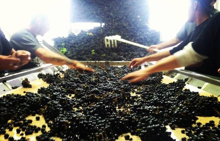 Lioco-Wines-Floor.jpg