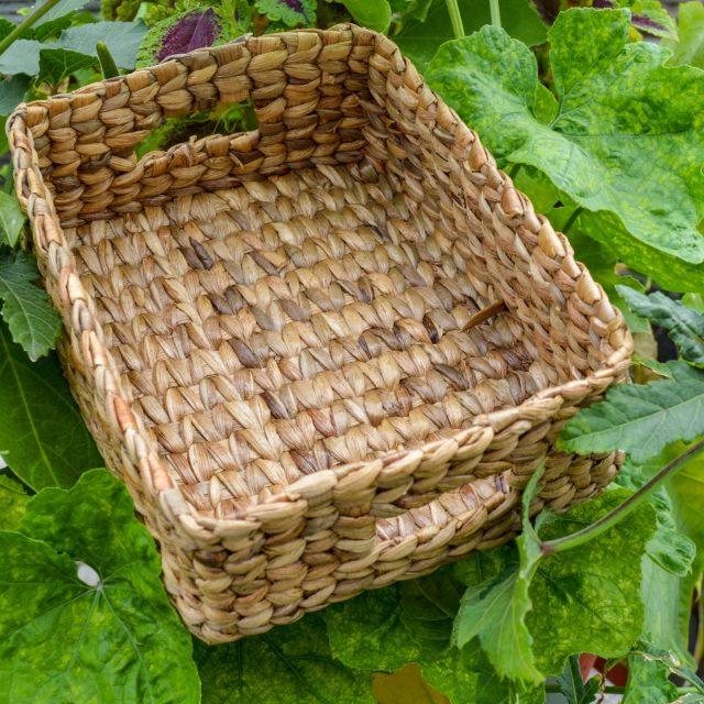 Buy hyacinth tray