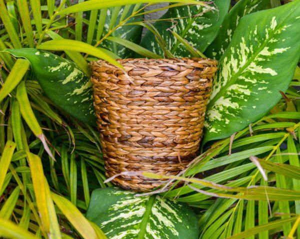Buy hyacinth planters