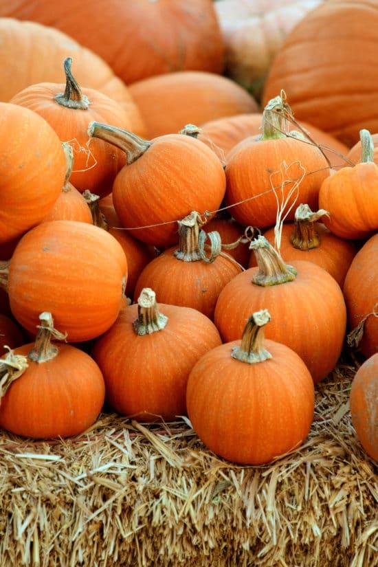 How to Cook Pumpkins / Photo by Mark Duffel / Unsplash.com