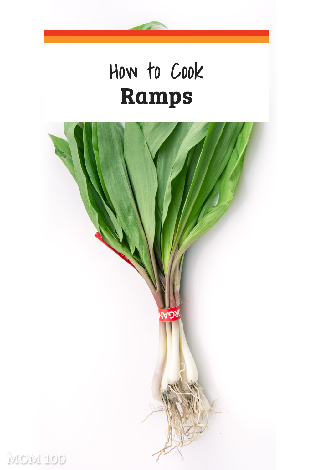 Ramps are essentially wild scallions, wonderful harbingers of spring.  Here\'s everything you need to know about how to harvest, prepare, and cook ramps.
