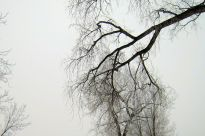 The Branches of our Trees