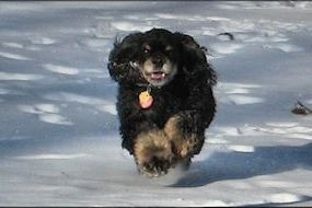 Rascal in the Snow
